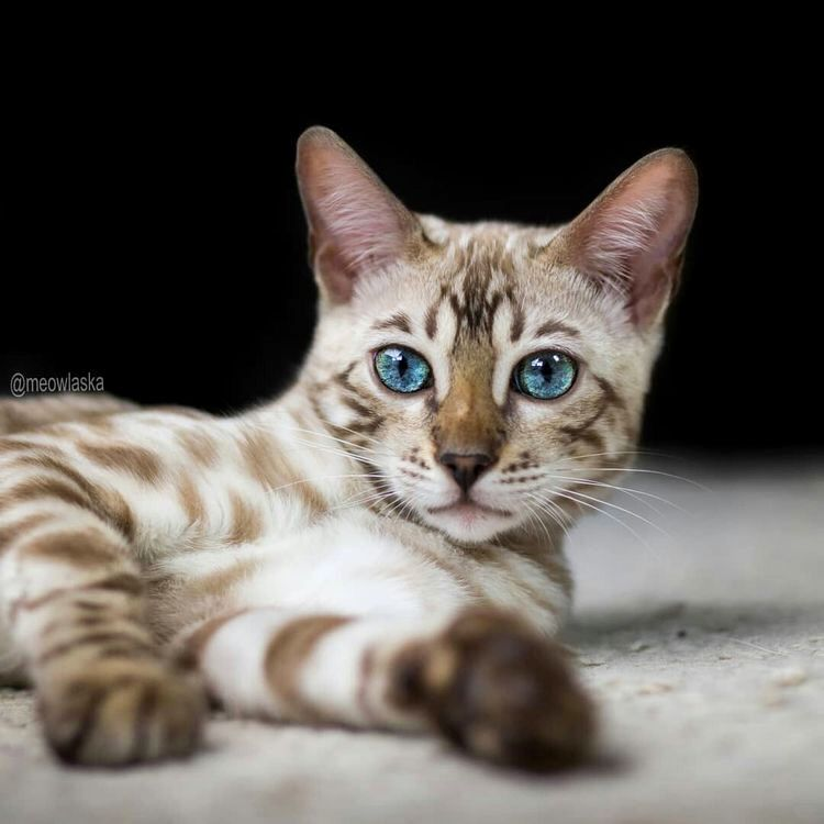 Cats Catlovers Catphotograph Chat Beautiful Cats Kittens