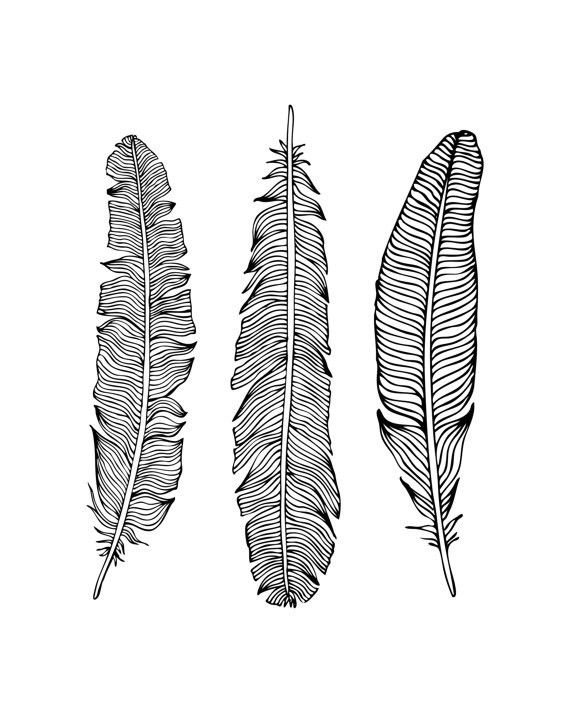 photo relating to Printable Feathers referred to as Black and White Indigenous Feather Printable Artwork - 8x10\