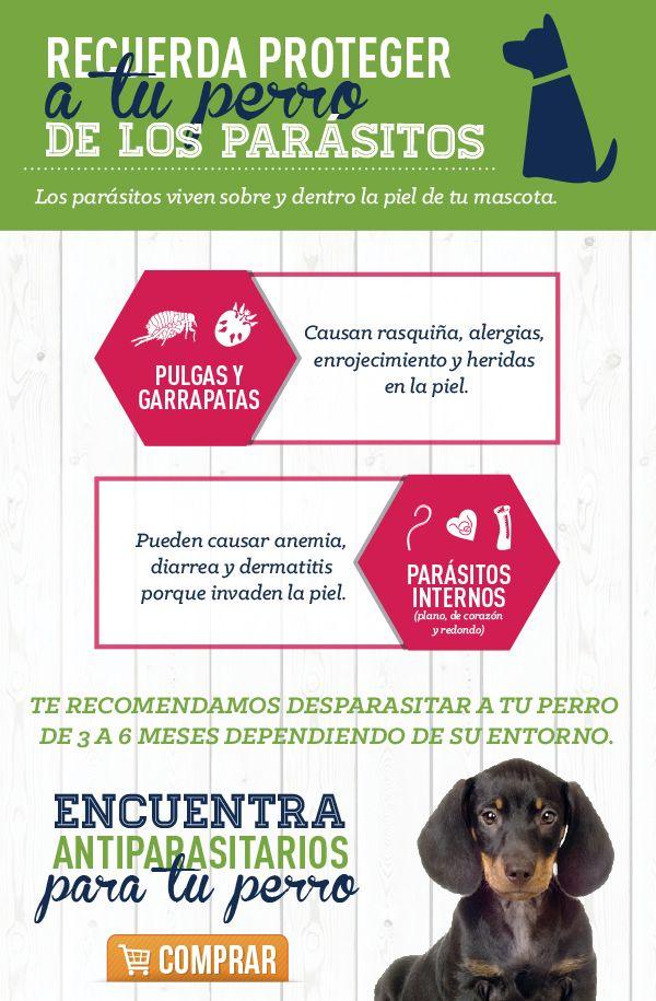 Los Parásitos Internos Y Externos Afectan La Salud De Tu Mascota Es Por Esto Muy Importante Que Mantenga Antipulgas Para Perros Consejos Para Mascotas Mascotas