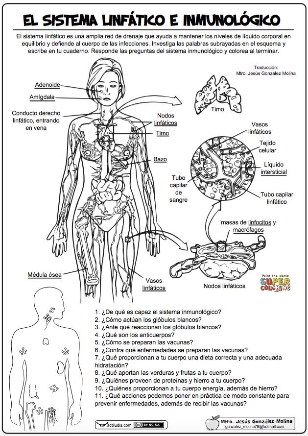 """El sistema linfático e inmunológico"""" es una ficha creada por Jesús ..."""