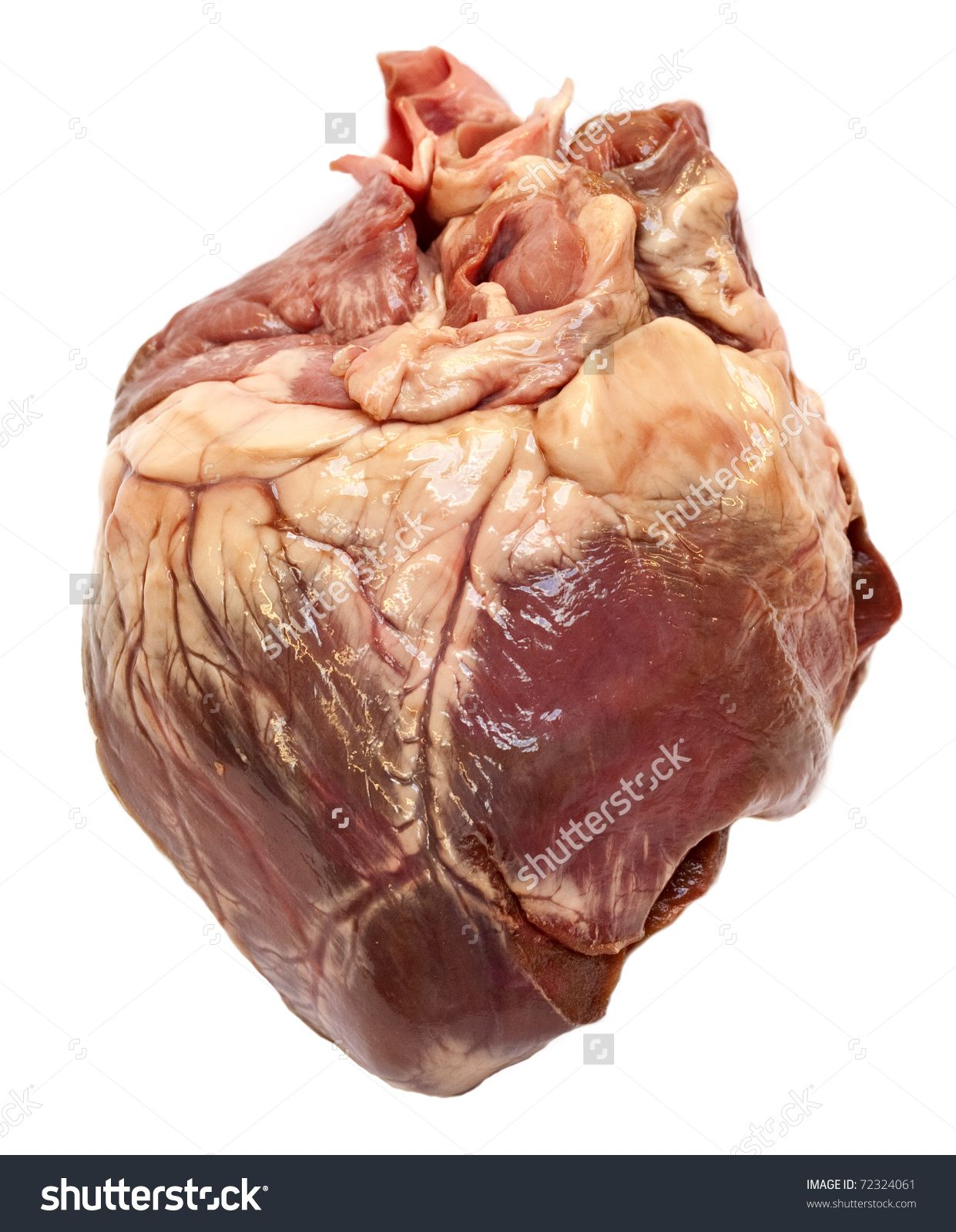 Real human heart images - photo#25