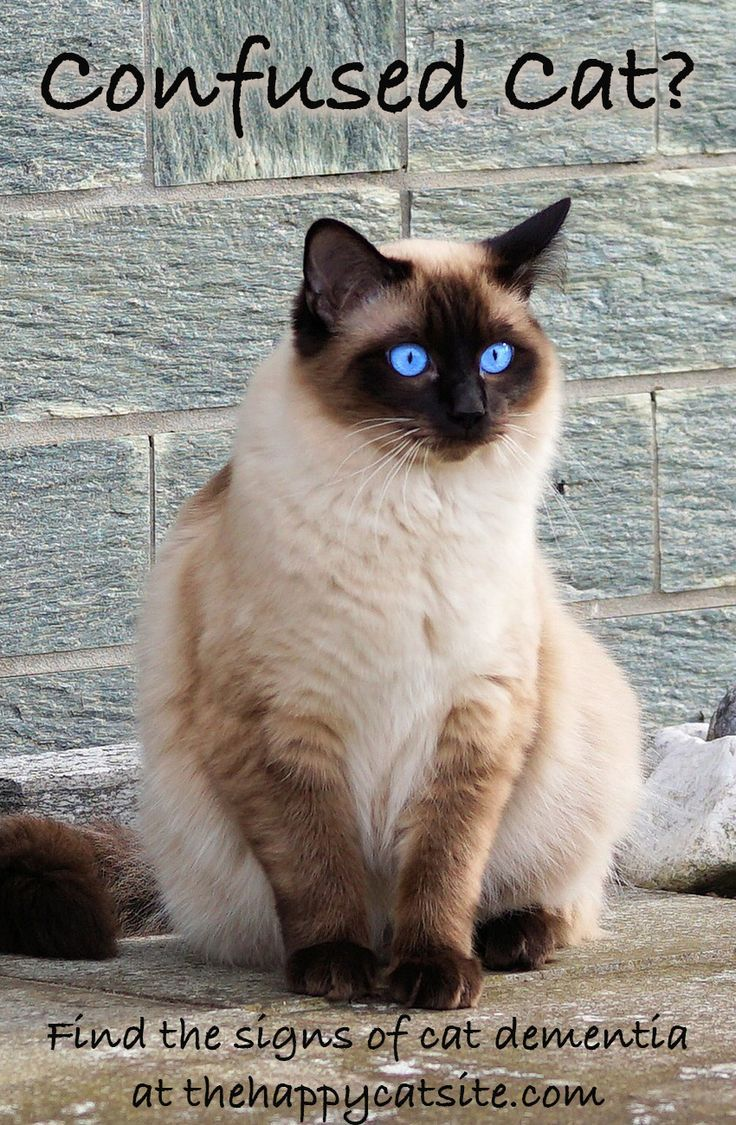 Cat Dementia Signs, Treatments & Tips For Living With A