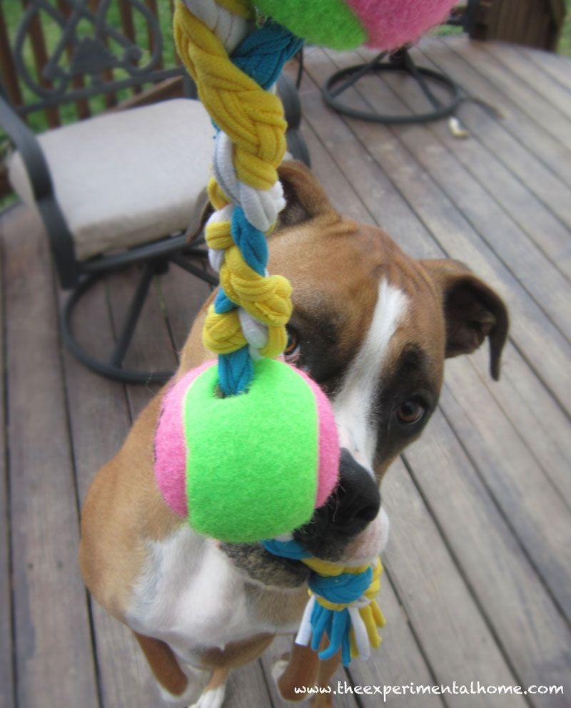 7 Cool Dog Toys To Make Yourself Diy Dog Toys Best Dog Toys