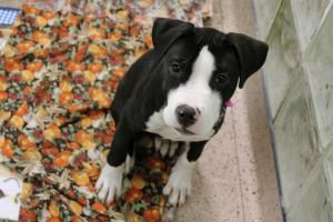 Erie county spca adoptable dogs / Olive branch old towne