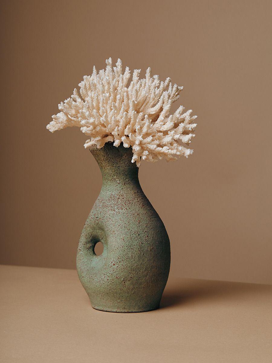 Sea creature buo pinterest cereal ikebana and flora