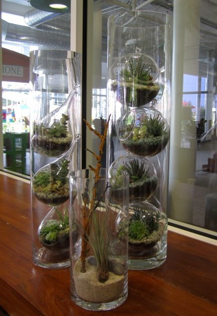 Google Up Decorating W Houseplants Tall Glass Vases Terrarium