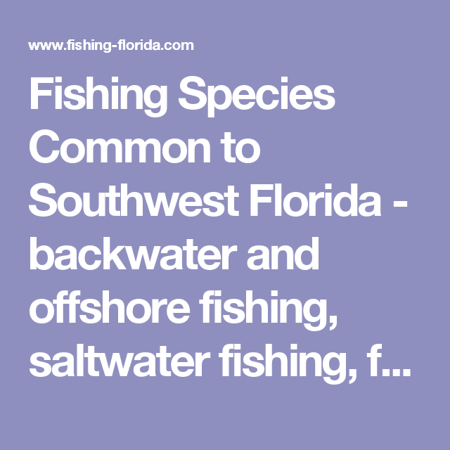 Fishing Species Common to Southwest Florida - backwater and