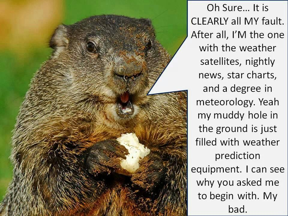 My Bad Groundhog Day Weather Prognostication Funny Memes Funny Pictures Weather Satellite