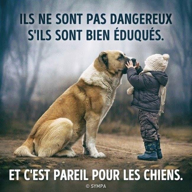 Bien Dit Citation Chien Humour Animaux Et Citation Animaux
