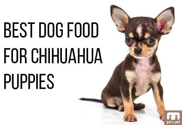 Best Dog Food For Chihuahua Puppies Pat My Pet Chihuahua