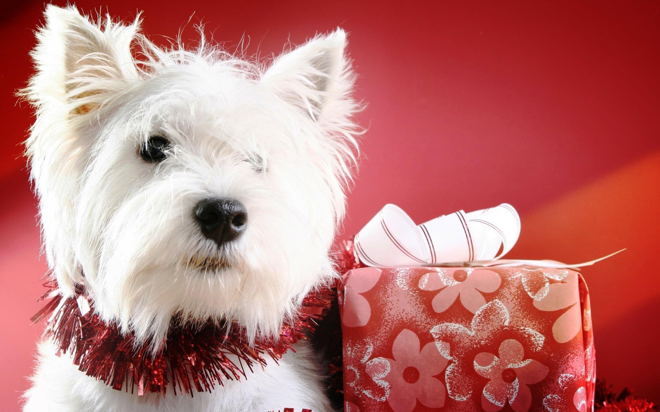 Cute Christmas Puppies Happy Christmas Wallpapers Dog Christmas Photos Christmas Puppy Dog Holiday