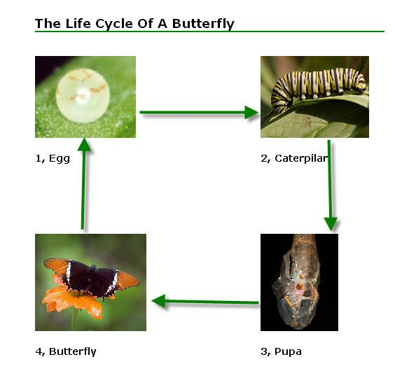 Butterfly life cycle lesson plans 4th grade