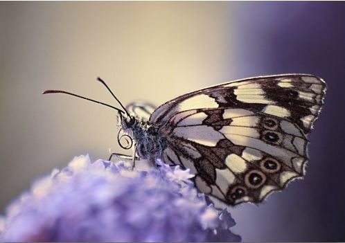 """""""Butterfly on flower"""" canvas wall art. Take a look at all the canvas and wall decor options for this purple artwork at GreatBIGCanvas.com."""
