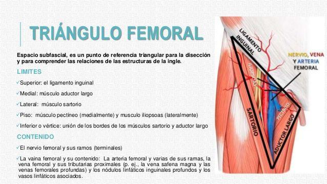 Image result for triangulo femoral | Anatomía | Pinterest