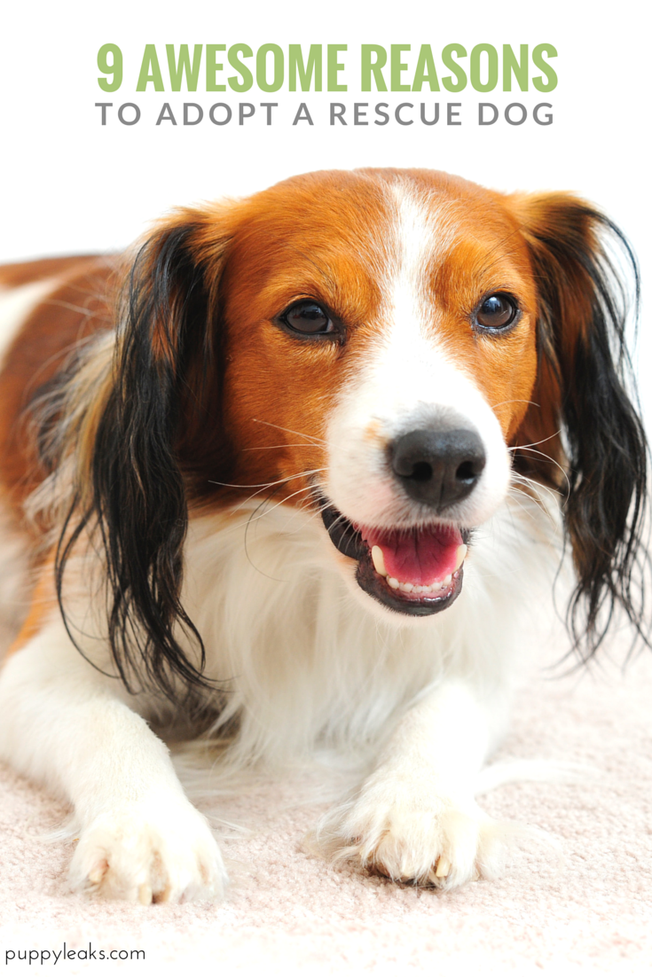 10 Benefits of Adopting a Rescue Dog Rescue dogs, Dogs