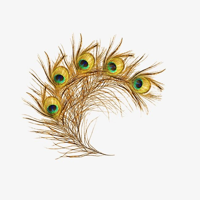 Peacock Feather Peacock Clipart Animal Png Transparent Clipart Image And Psd File For Free Download Peacock Feather Art Feather Logo Feather Art