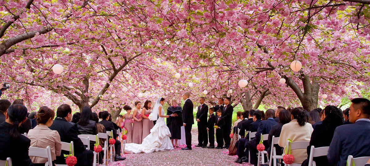 Image result for wedding japanese garden fort worth cherry