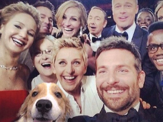 Muttbombing: Rescue Photoshops Adoptable Dogs into Celebrity 'Selfies' | petMD