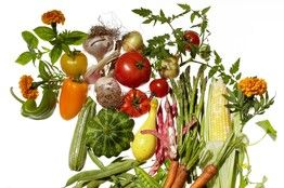 Companion Planting: Garden Friends and Foes