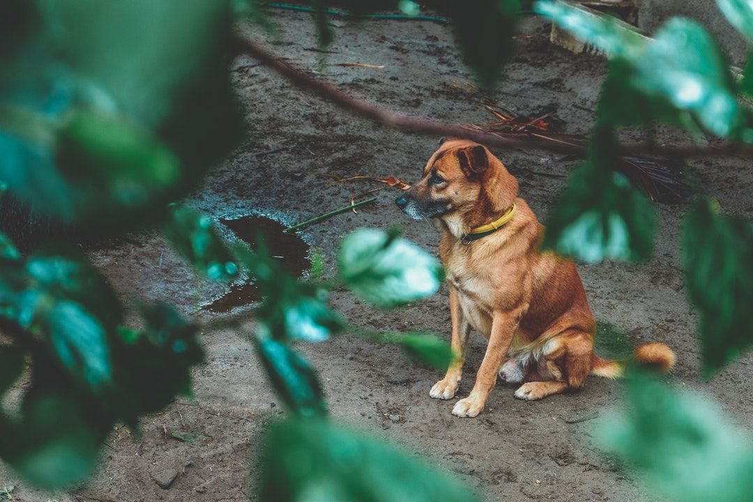dog training classes prices near me Hiking dogs, Dog
