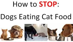how to stop dog from eating cat food