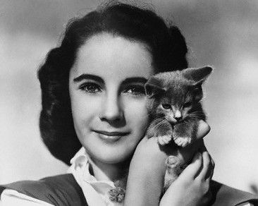 Pickpocket: Vintage photos: Famous cat lovers...Young Liz Taylor