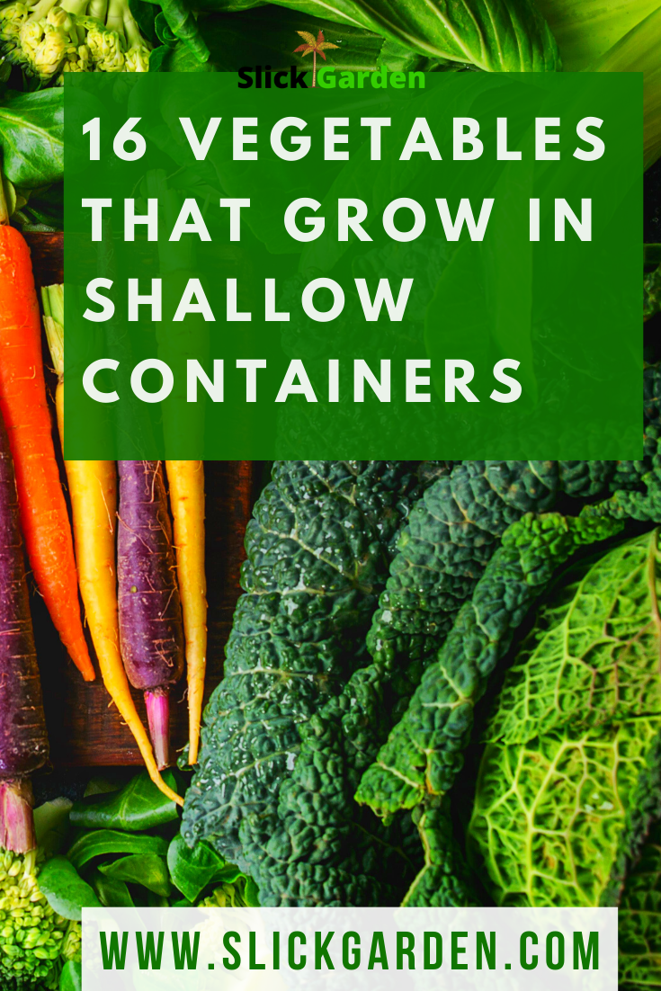 16 Vegetables That Grow In Shallow Containers These 16 Vegetables Will Gr In 2020 Fast Growing Vegetables Growing Vegetables In Pots Growing Vegetables In Containers