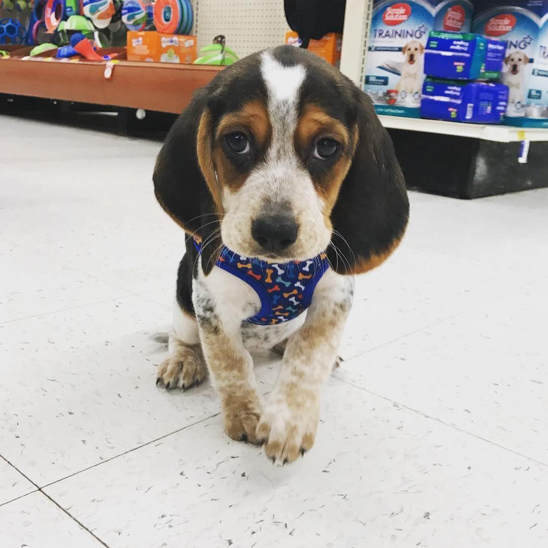 Freckles Is Visiting The Vet Today Petsmart Salem Salemma