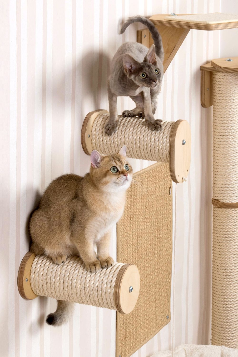 Profeline climbing wall for cats cat decor pinterest cat profeline climbing wall for cats amipublicfo Image collections