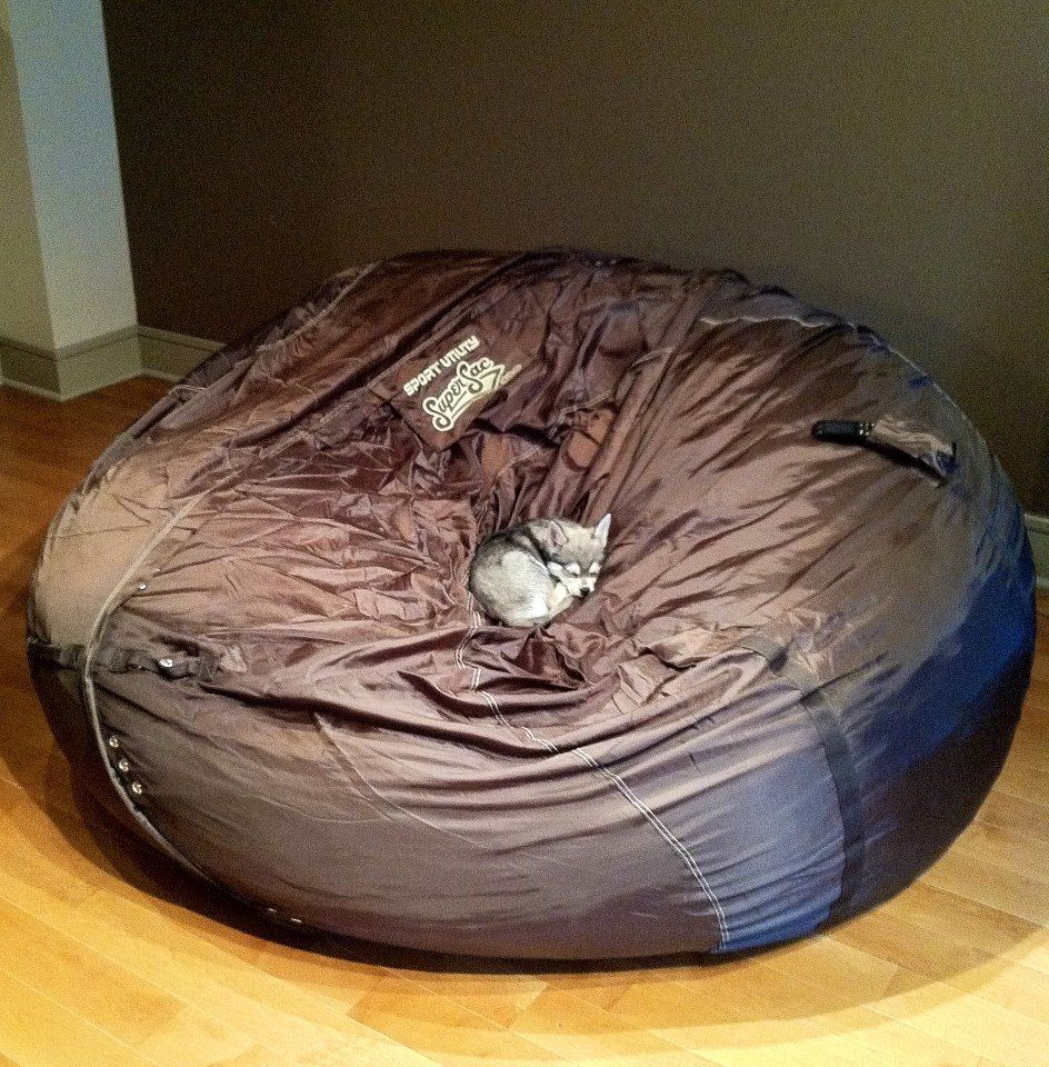 Miniature Husky Puppy Napping In An Over Sized Bean Bag