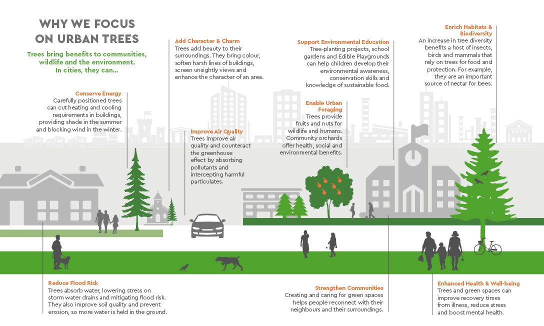 Why We Focus On Urban Trees Trees For Cities Infographic Jpg 1088