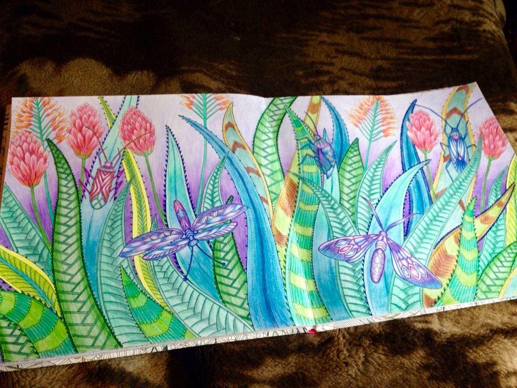 Agave Aloe Moths Tropical Wonderland Millie Marotta