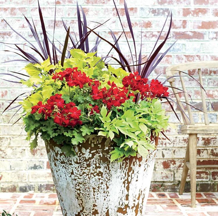 Top große Blumenkübel bepflanzen rote geranien buntnessel ziergras @GQ_42