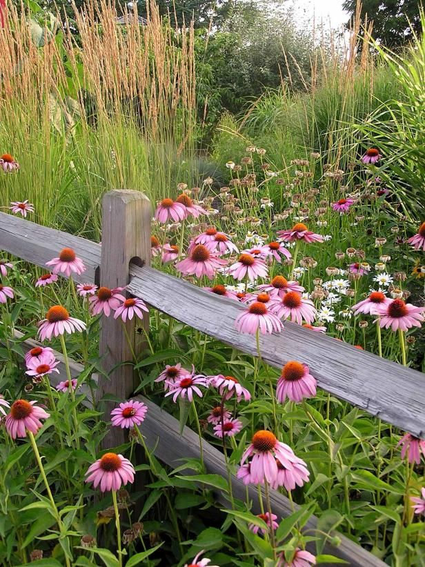 Grow Guide Plant A Wildflower Garden For A Charming Natural Look Wildflower Garden Plants Wild Flowers