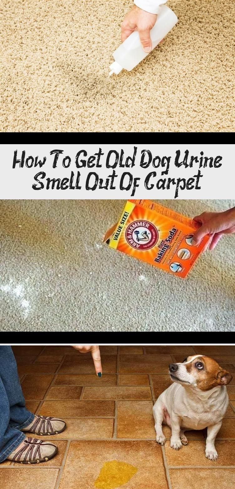 How to get old dog urine smell out of in 2020 with images