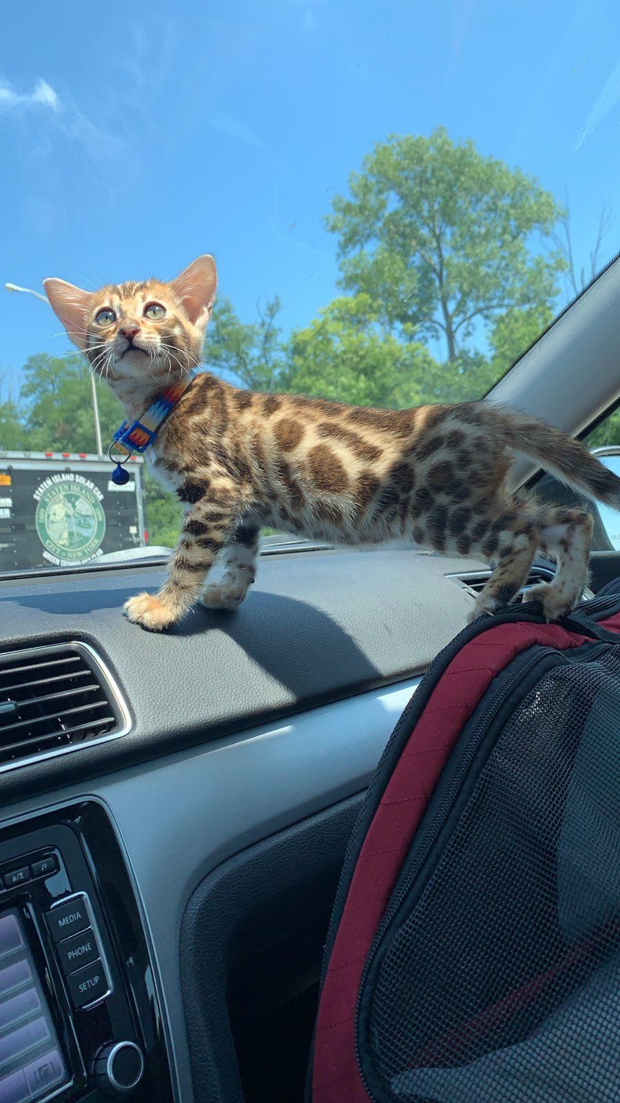Cleopatra En Route To Her New Throne Bengal Cat Kitten Cute Baby Animals Cats And Kittens