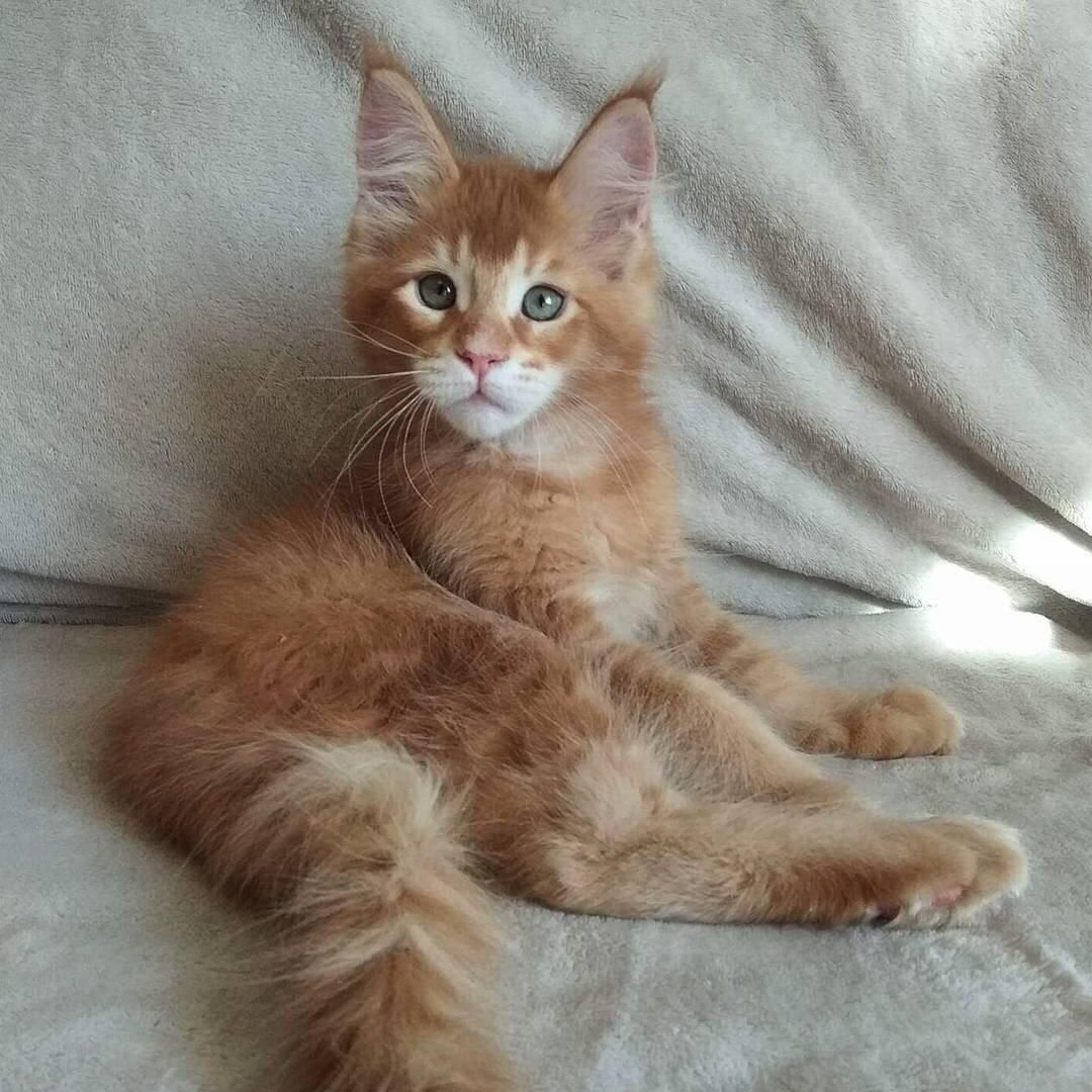 Look at this sweet baby iftinoal cute puppies cats