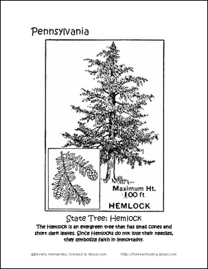 Pennsylvania State Tree Coloring