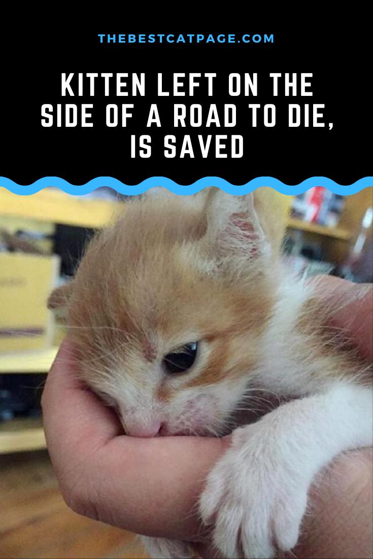 Kitten Left On The Side Of A Road To Die Is Saved In 2020 Kitten Kittens Cutest Kittens Funny