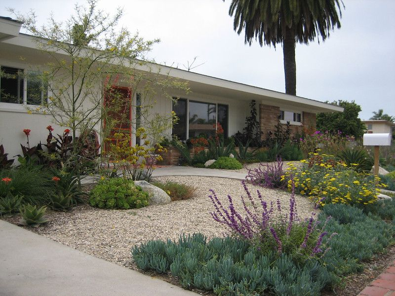 Drought resistant landscaping drought resistant native for Drought tolerant front garden designs