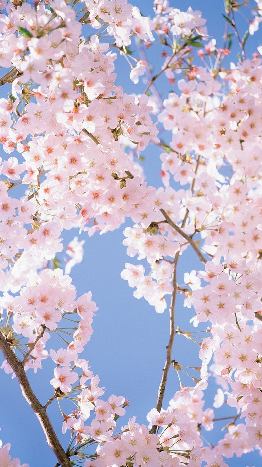 White Flower HD Wallpapers For Mobile Flower phone