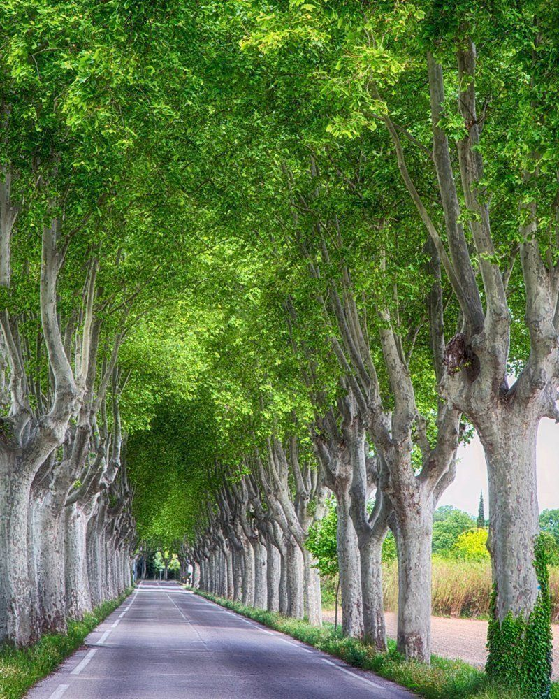 Provence france french country decor france wall art print travel