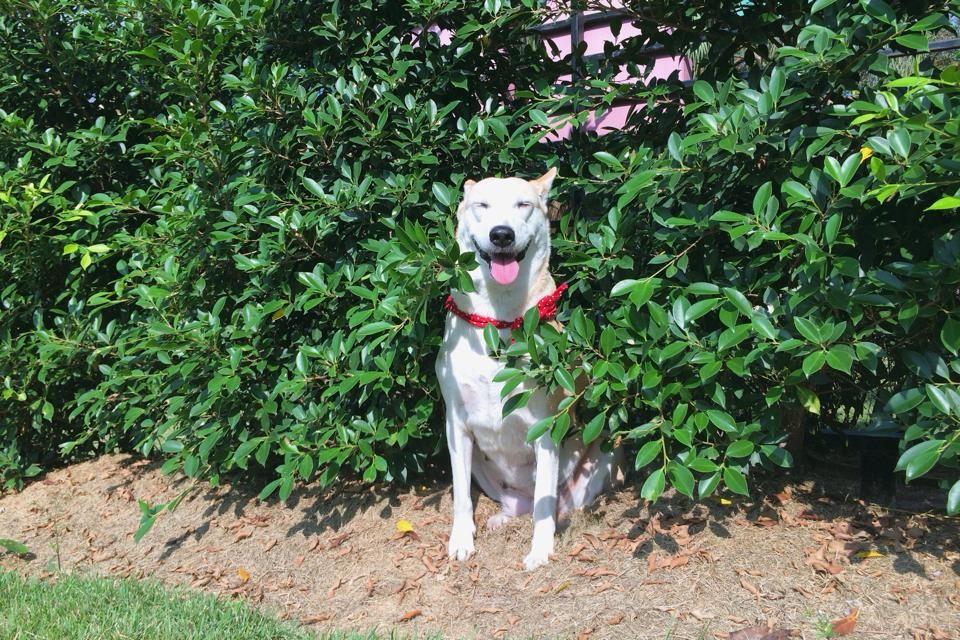 Glutatumblrcom GLUTA Pinterest - Meet gluta the smiling dog that beat cancer