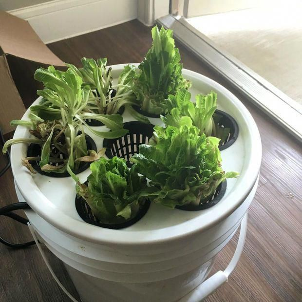 Lettuce For Life How To Build An Automated Controller For