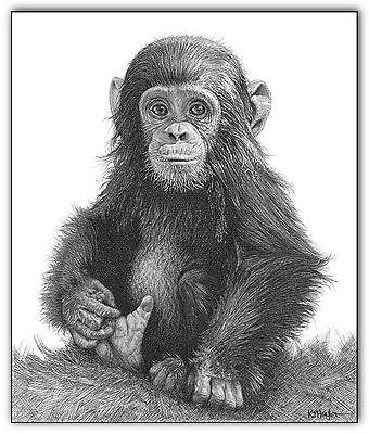 chimp art print monkey portrait picture baby animal sketch a3 wildlife drawing
