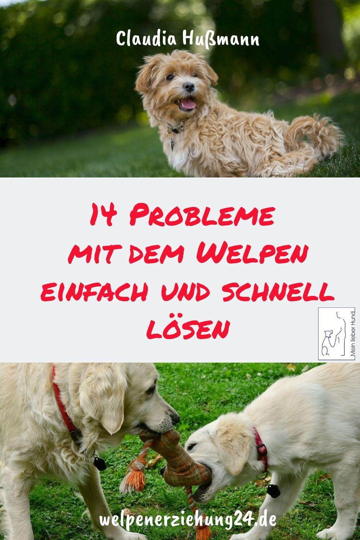 Das Total Andere Welpenbuch Welpen Welpenerziehung Hundeerziehung