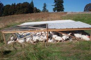 Pastured Poultry Joel Salatin Chicken Tractor Plans