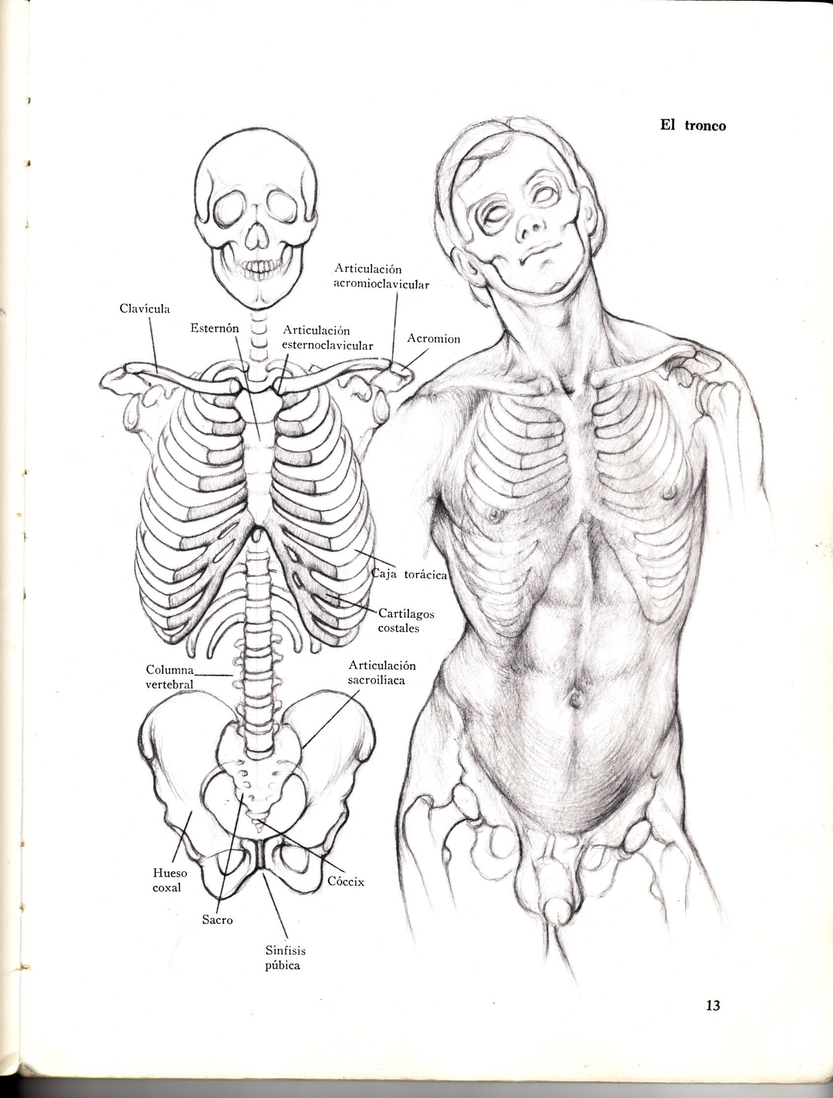 Wunderbar Beckenlymphknoten Galerie - Menschliche Anatomie Bilder ...