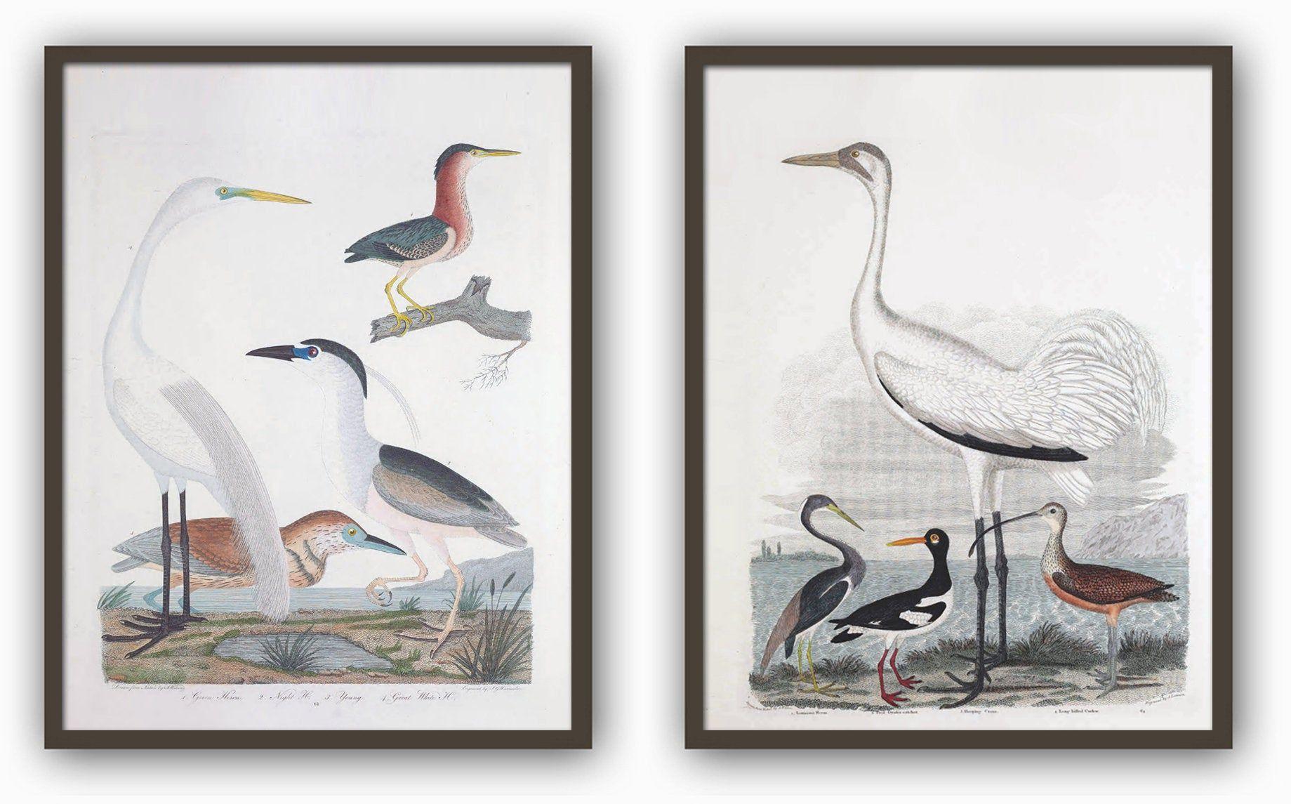 Birds Print Set Of 2 Large Wall Art Decor Heron And Crane Etsy Bird Prints Turtle Wall Art Antique Bird Illustration