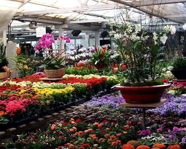 the bright and cheery culver city greenhouse filled to the brim with plants rolling greens. Black Bedroom Furniture Sets. Home Design Ideas
